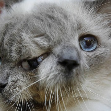 2-faced-kitty