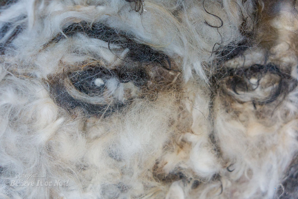 Michael jackson Closeup in Dog Fur by Mateo Blanco