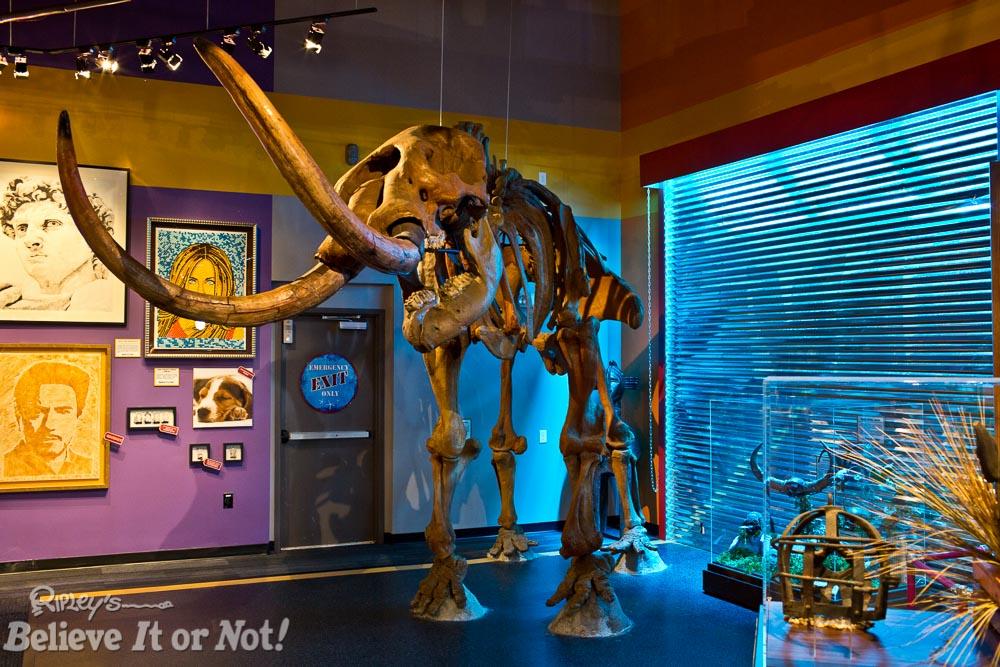 Stand next to a Mastodon!
