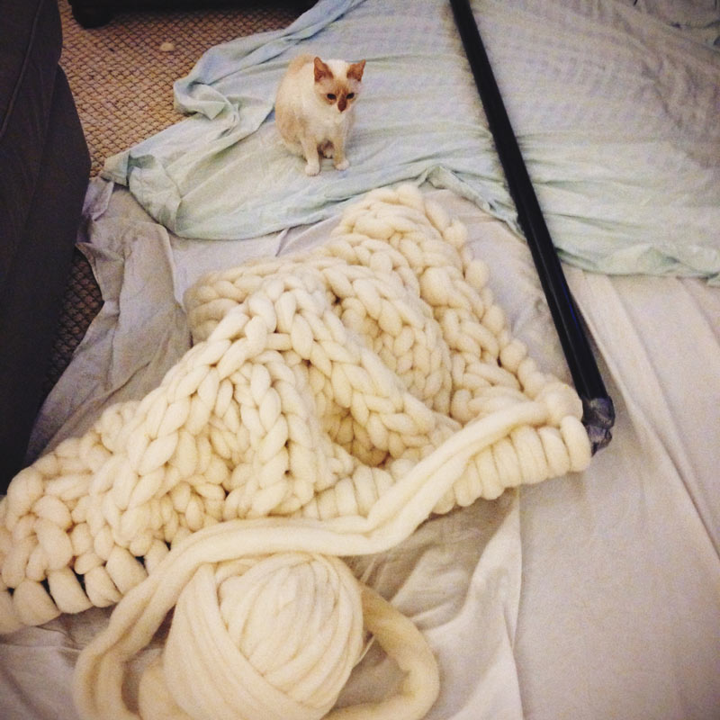 Giant Knitting Needles Next to Her Cat