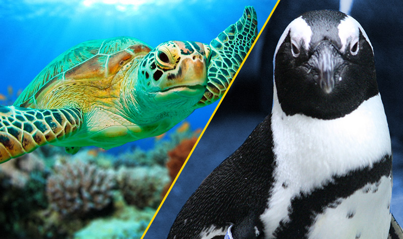 turtle and penguin