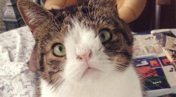 nose-less cat