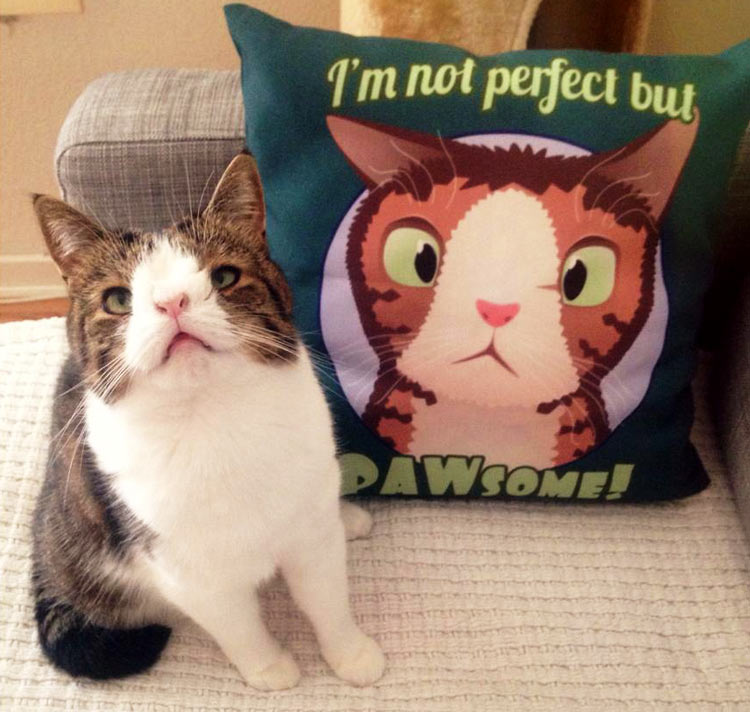 Monty-With-Brand-Pillow