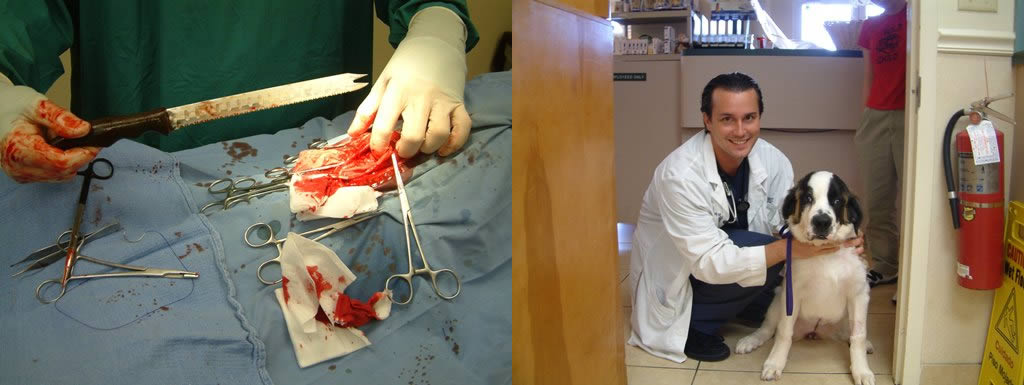 Dr. Carew during and after surgery with Elsie