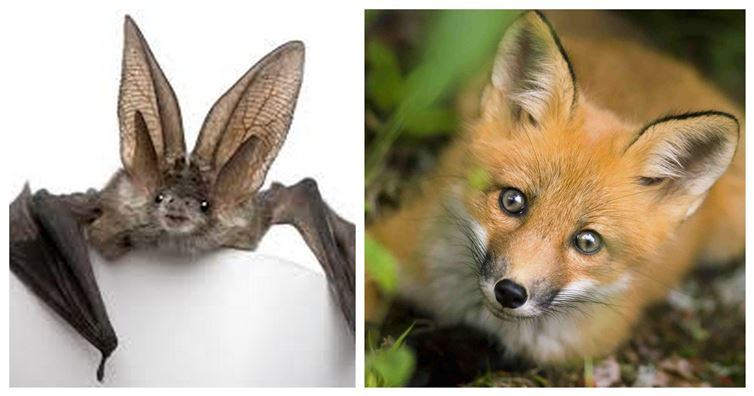 12 Surprising Animal Mashups