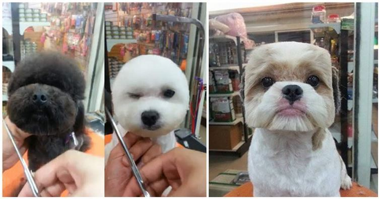 Pet Trend In Taiwan Perfectly Square Or Round Heads