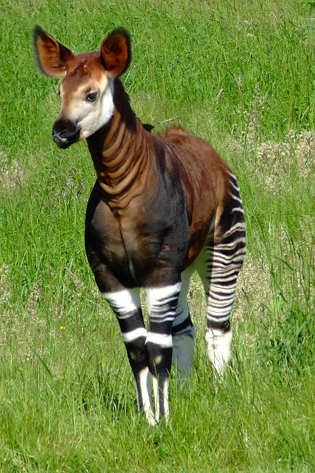 12 Surprising Animal Mashups - OKAPI