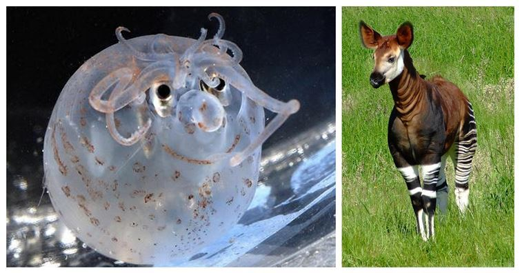 Animal Mashups