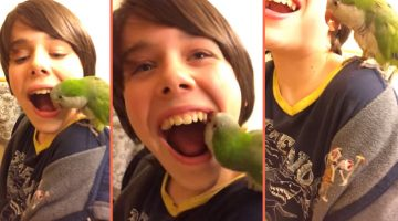 Parrott-Dentist-Ripleys-Header