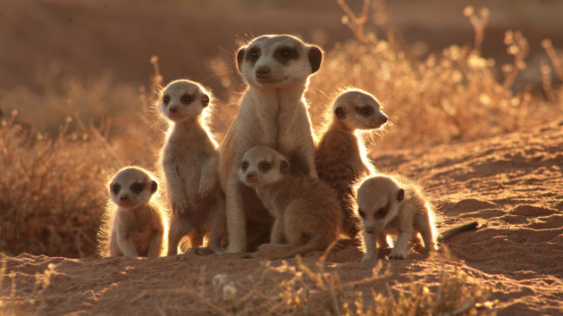 The Most Amazing Moms In The Animal Kingdom
