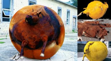inflated taxidermy