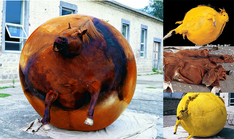 weird taxidermy artist inflated animals into colorful balloons
