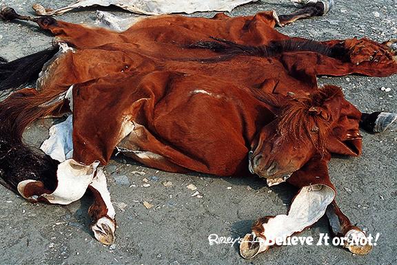 Deflated Horse Skin