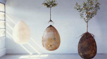 biodegradable coffin