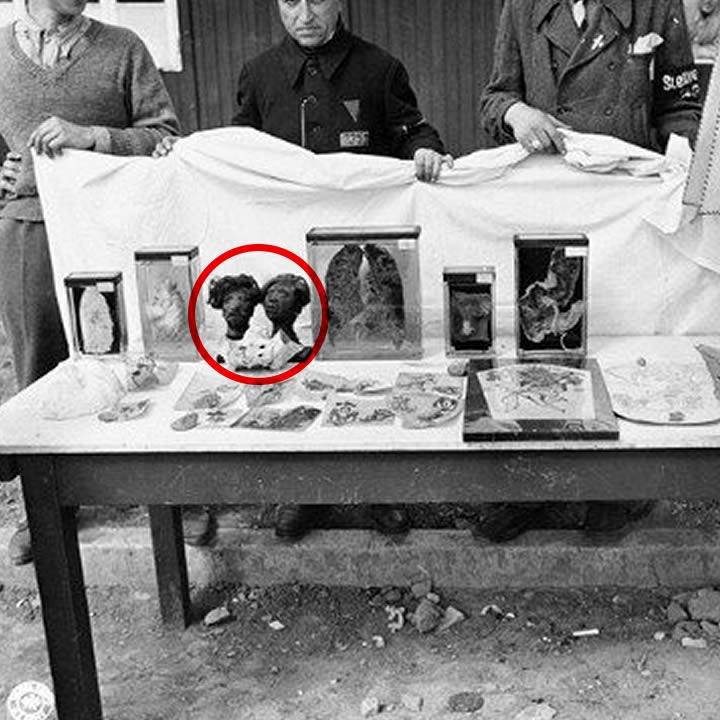 Two Nazi shrunken heads used in the Nuremberg trials
