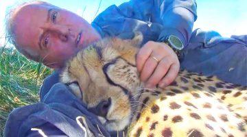cuddle cheetah