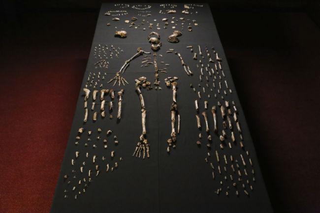 nadeli skeleton