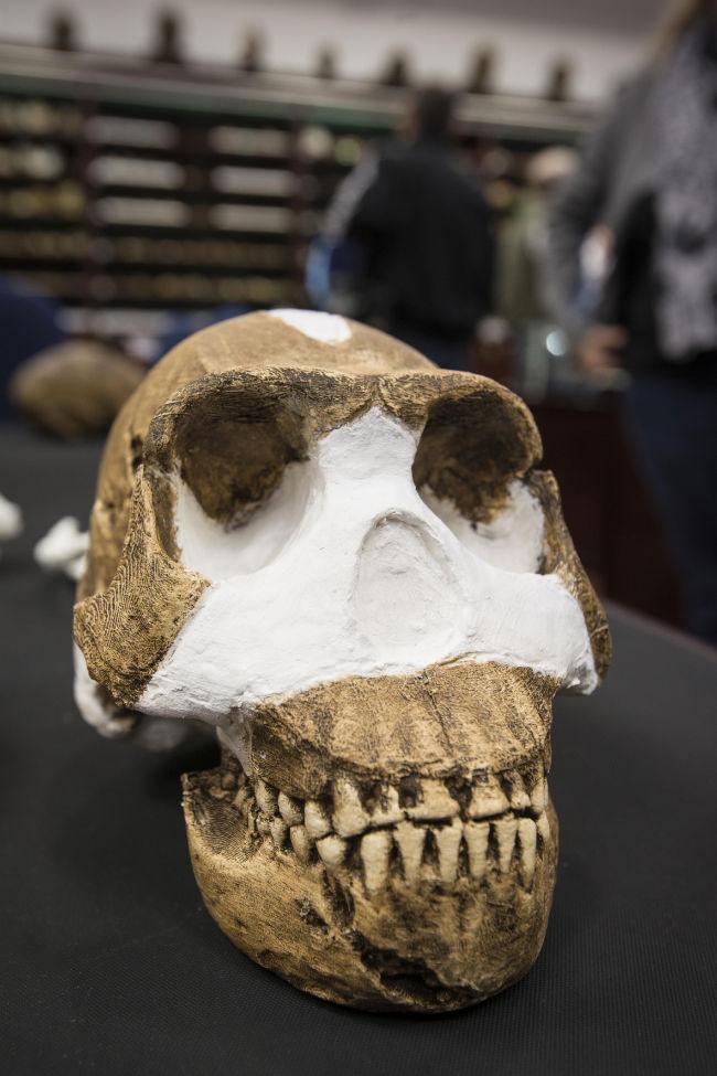 nadeli-skull