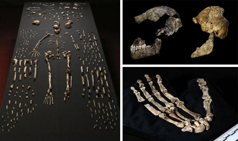 new human ancestor parts