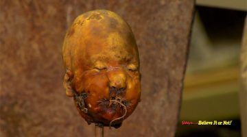 shrunkne head