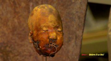 shrunkne head
