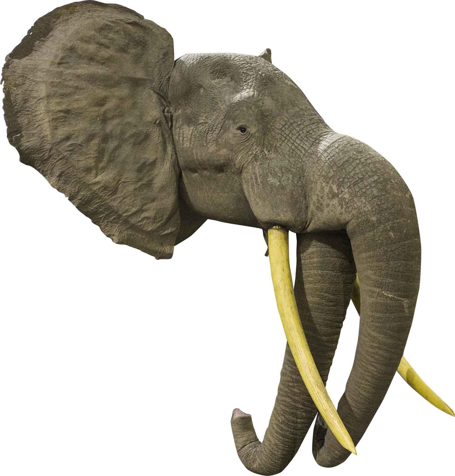 2-Trunk-Elephant