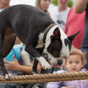 Balancing-Dog