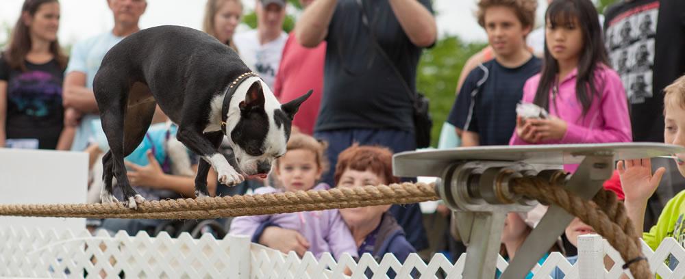 Tightrope-dog