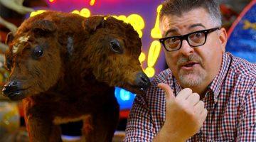 animal-oddities-blog-thumbnail
