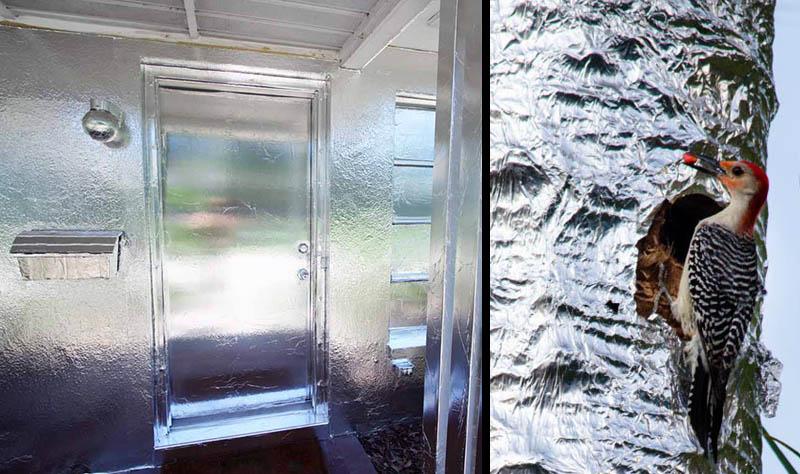 Aluminum Foil Windows : Man covers home palm trees in aluminum foil
