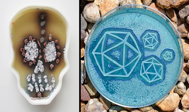 microbe art