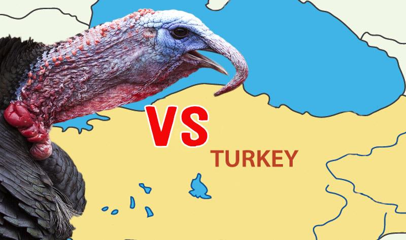 turkey vs turkeys