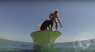 Dog dives for lobster