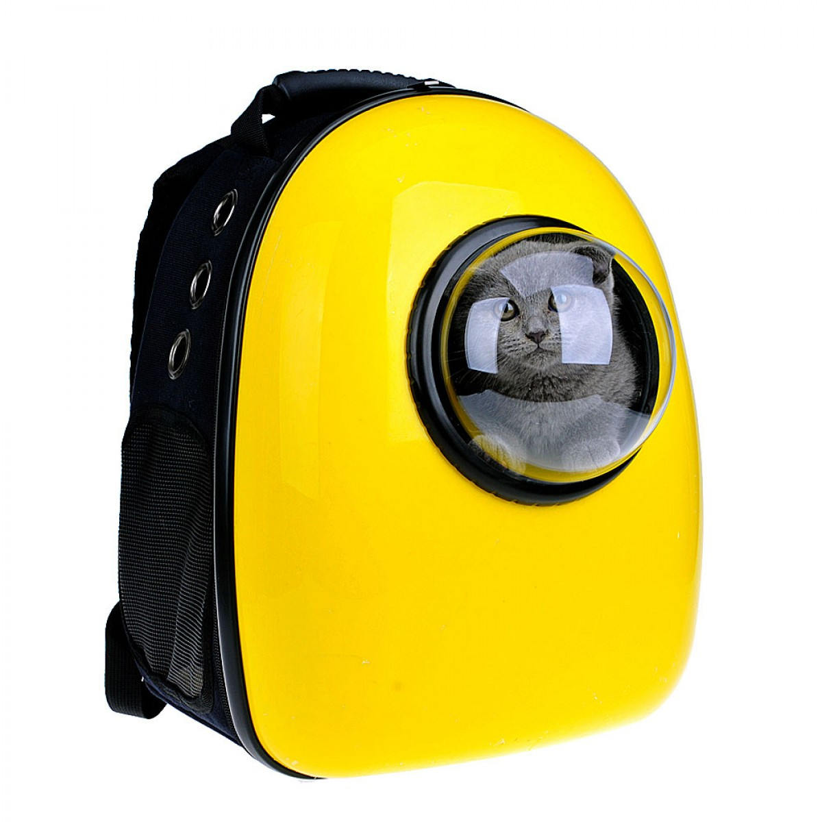 windowed pet carrier