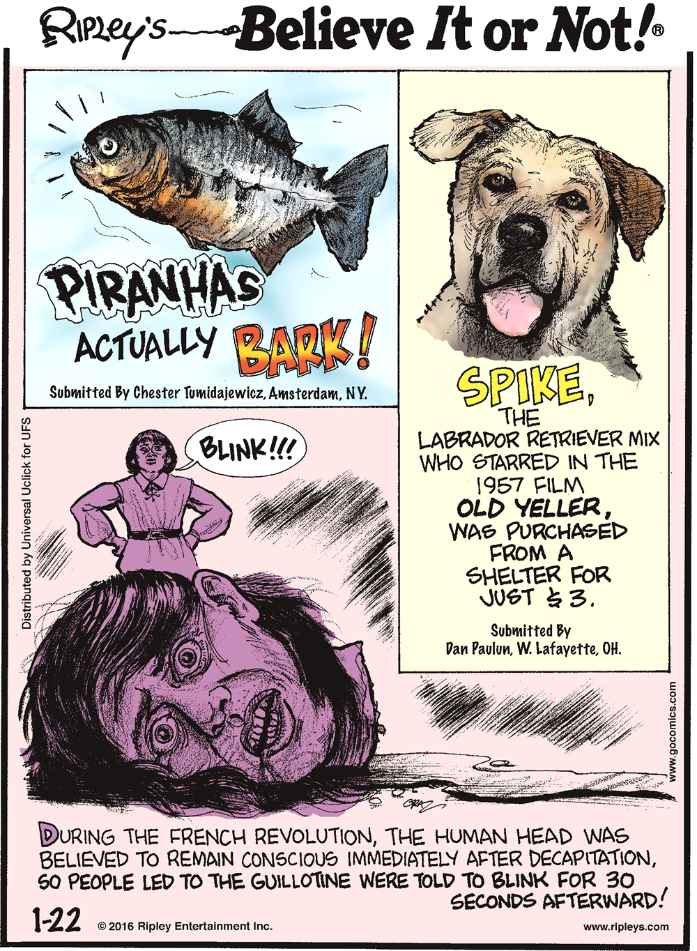 Piranhas actually bark! Submitted by Chester Tumidajewicz, Amsterdam, NY. -------------------- Spike, the Labrador retriever mix who starred in the 1957 film Old yeller, was purchased from a shelter for just $3. Submitted by Dan Paulum, W. Lafayette, OH. -------------------- During the French Revolution, the human head was believed to remain conscious immediately after decapitation, so people led to the guillotine were told to blink for 30 seconds afterward!
