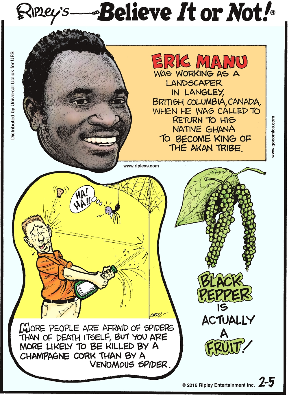 Eric Manu was working as a landscaper in Langley, British Columbia, Canada when he was called to return to his native Ghana to become king of the Akan tribe. -------------------- More people are afraid of spiders than of death itself, but you are more likely to be killed by a champagne cork than by a venomous spider. -------------------- Black pepper is actually a fruit!