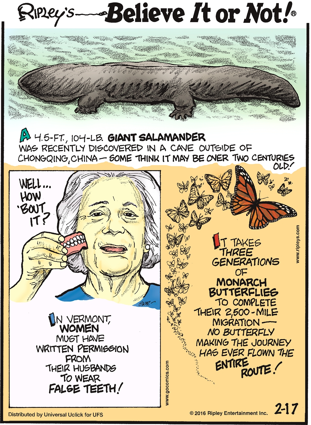 A 4.5-ft, 104-lb giant salamander was recently discovered in a cave outside of Chongquing, China—some think it may be over two centuries old! -------------------- In Vermont, women must have written permission from their husbands to wear false teeth! -------------------- It takes three generations of monarch butterflies to complete their 2,500-mile migration—no butterfly making the journey has ever flown the entire route!