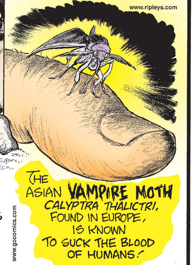 Moth Plague