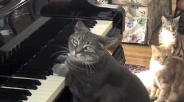 piano-playing cat