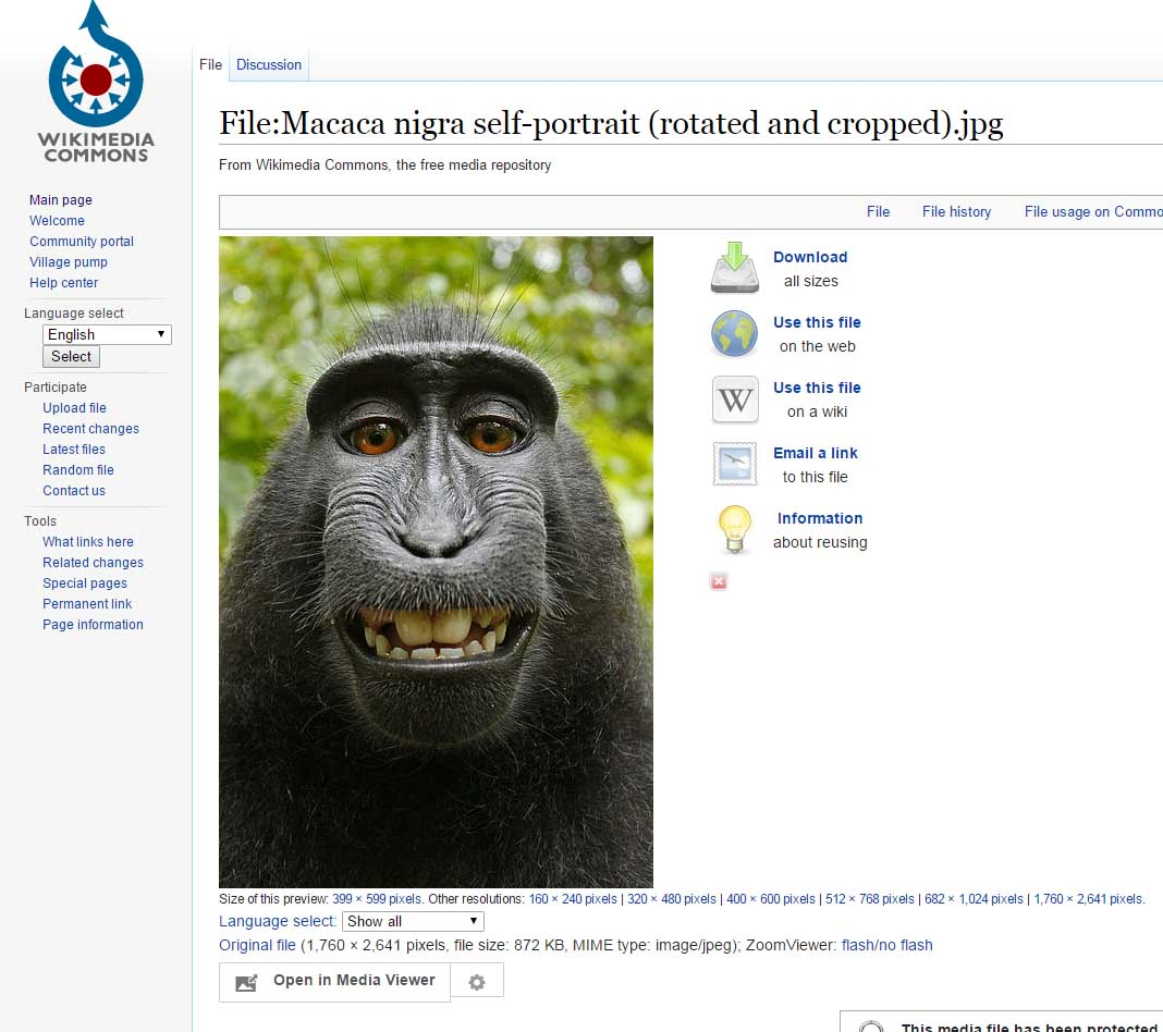 macaque-wikimedia