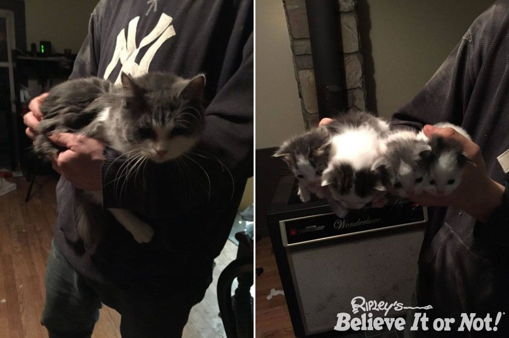 mother-kittens