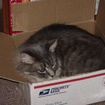 Mailed cat