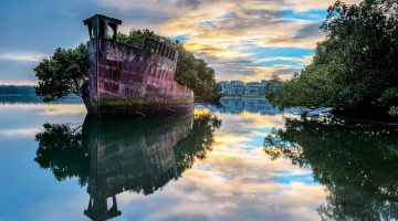100-Year-Old Ship Is Now Floating Forest