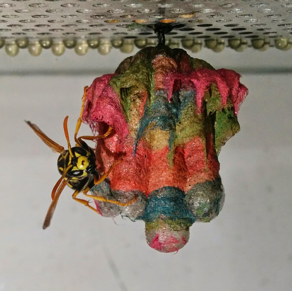 how to clear a wasp nest