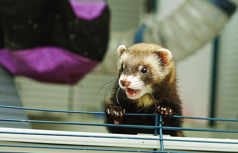 Ferrets Saved a Y2K Concert