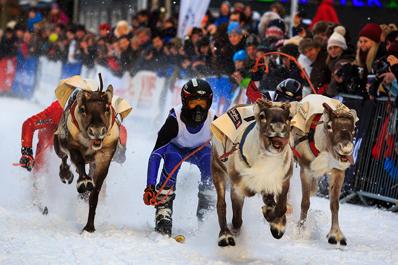 National Dog Day Finland