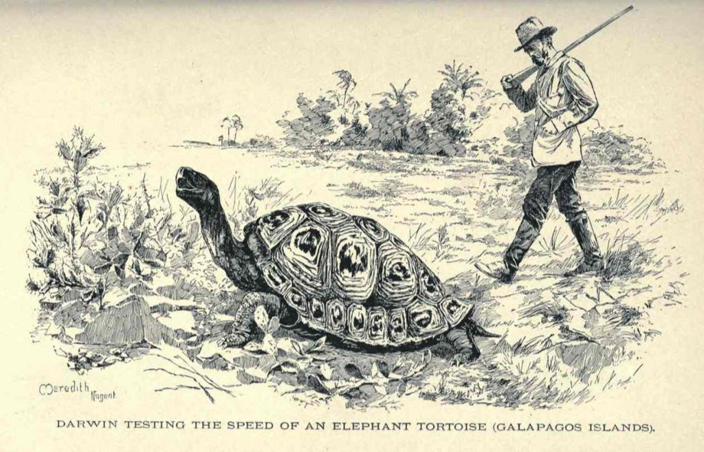 "In the Galapagos, Darwin dined on a few giant tortoises, but at least two survived the voyage back to England. Recorded as ""Mine from James"" in his logs, Darwin collected somewhat of a pet during his stay on Santiago (formerly James Island)."