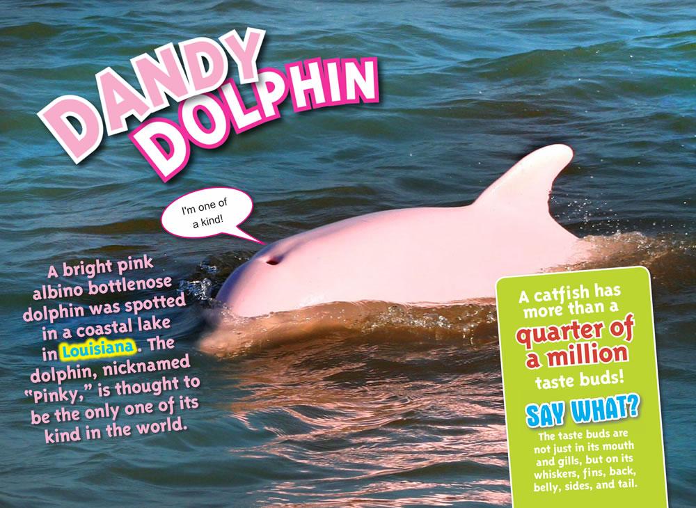 Ripleys-Pink-Dolphin