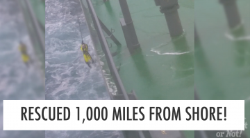70-Year-Old Stein Hoff Rescued 1,000 Miles From Shore!