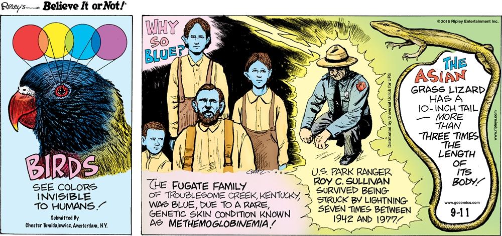 Cartoon 09 11 2016 Ripley S Believe It Or Not